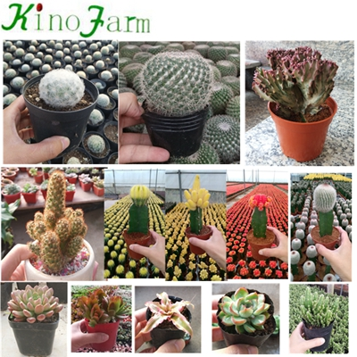 Natural Plant Indoor Succulent House Plants