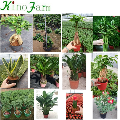 All Types Of Sansevieria Plants
