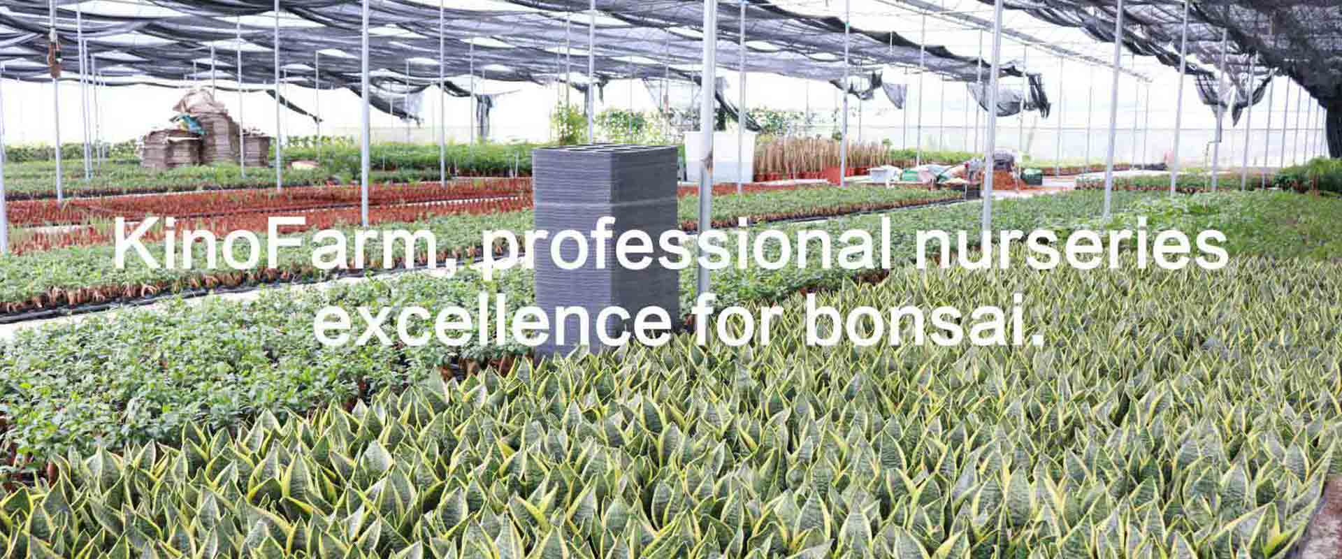 Bonsai and Indoor Plants Suppliers